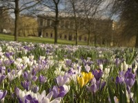 The Trinity College backs in spring. A concert of flowers from February to May.